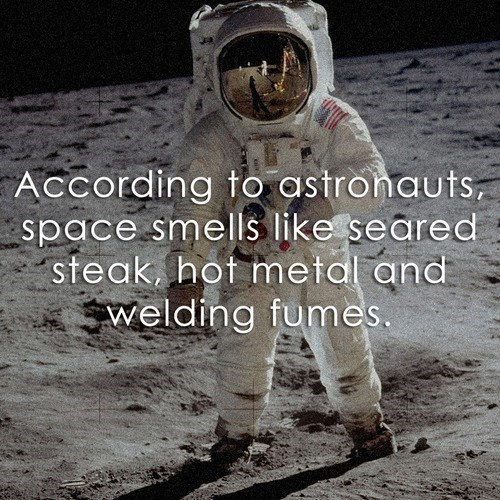 smells astronauts science funny space - 7995881472