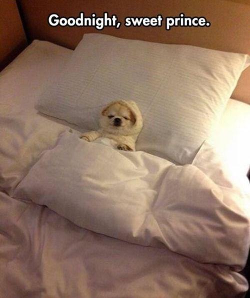 cute prince sleep Cats - 7996208896