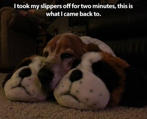 steal dogs cute slippers warm - 7996257792