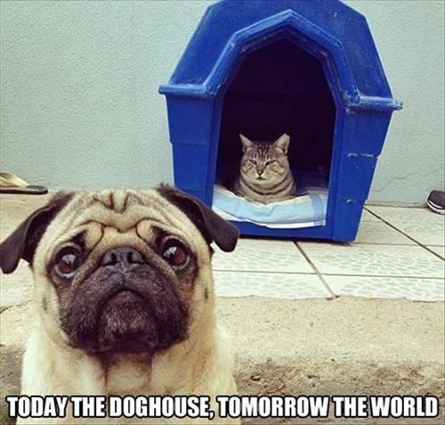 world,dogs,conquer,doghouse,Cats