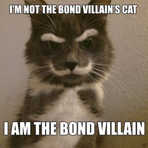 mustache james bond cute Cats funny villain - 7996271360