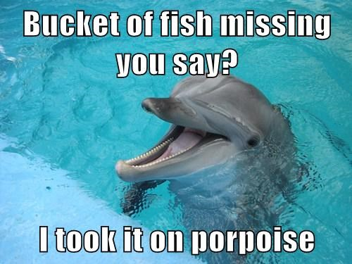 dolphins,puns,fish,funny