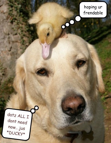 hoping ur frendable datz ALL I dont need now.. jus *DUCKY*