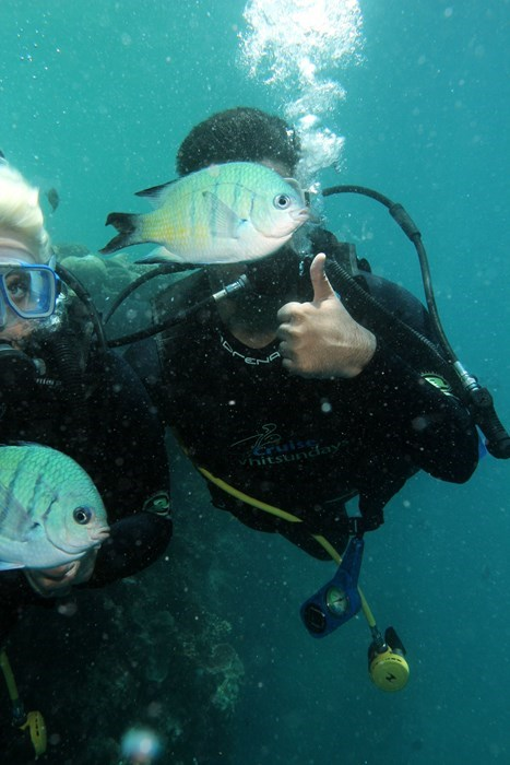 photobomb thumbs up fish scuba diving - 7997300480