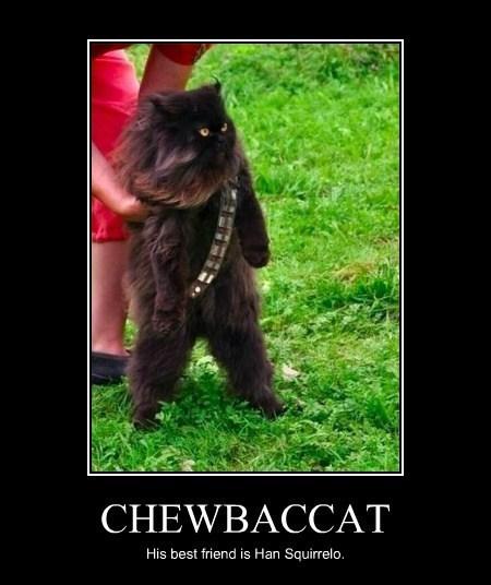 cat star wars chewbacca funny - 7997541120