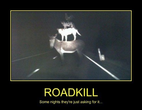 roadkill points funny animals