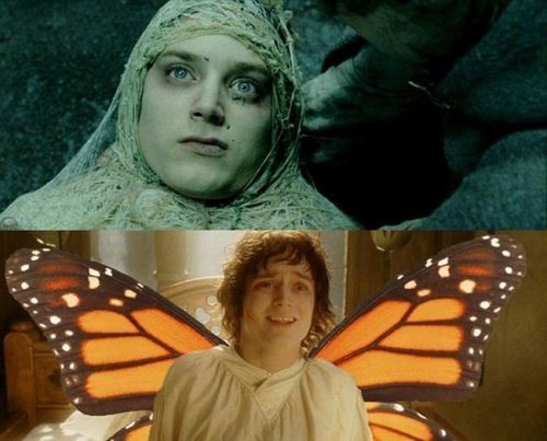 frodo,butterfly,metamorposis