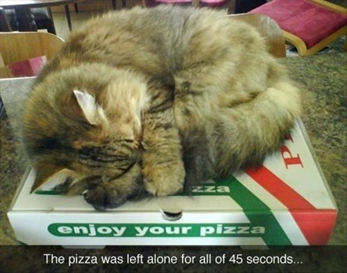 hot pizza Cats funny