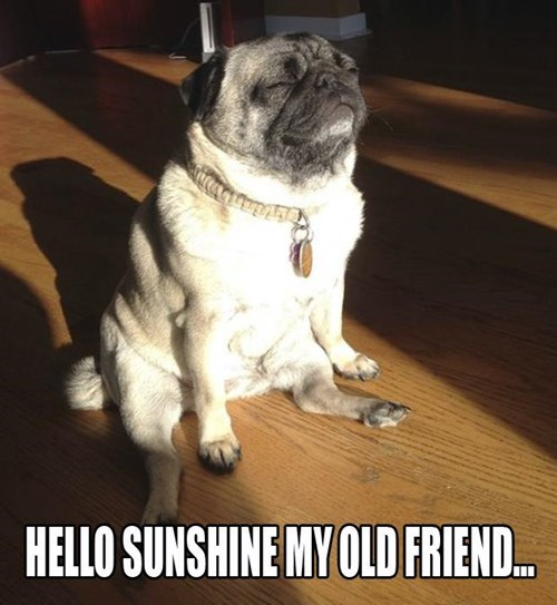 dogs cute sun funny warm - 7997853184
