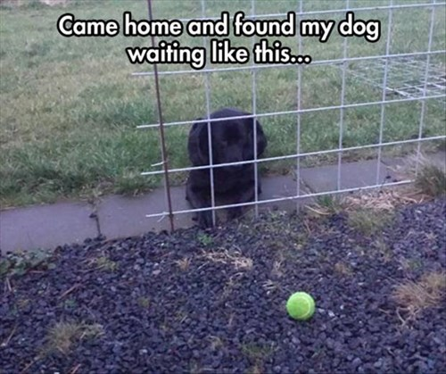 dogs learn fence ball funny