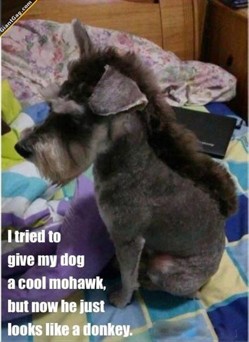 dogs FAIL mohawk donkeys - 7997859072