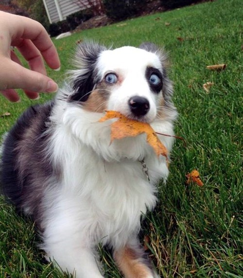 autumn dogs mine leaves funny fall - 7997872128