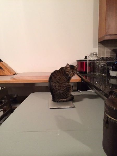 laptop Cats funny - 7997918976