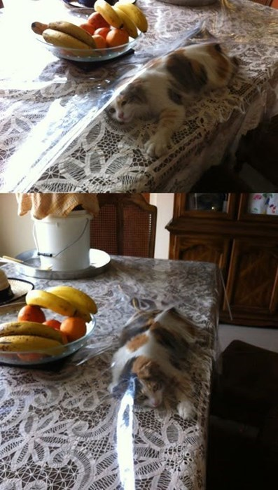 table cloth curious Cats regret - 7997920256