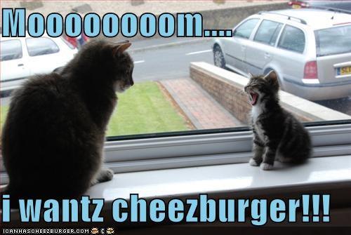 Cheezburger Image 799844608