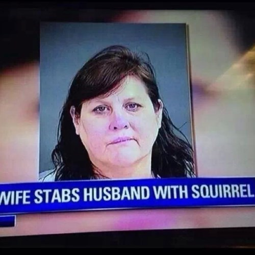 news really wtf squirrels wtf - 7998755072