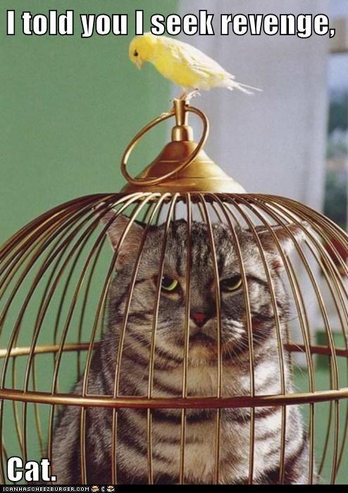 birds revenge Cats funny - 7999854592