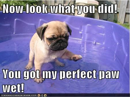 bath cute dogs puppies pool wet - 7999888128