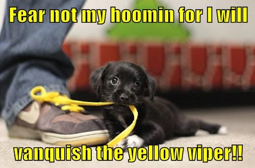 cute rescue puppies - 8000481280