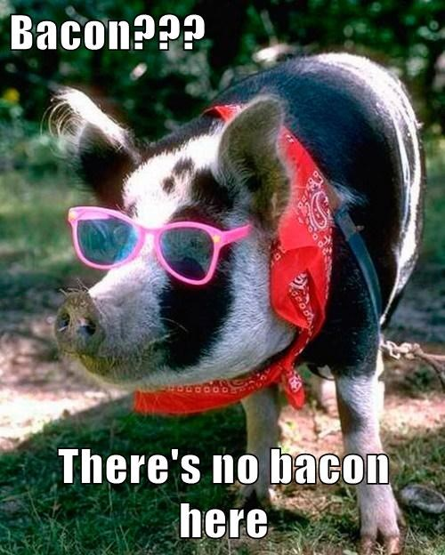 disguise,pig,bacon