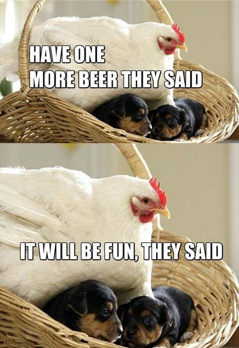 puppies chickens mistake They Said