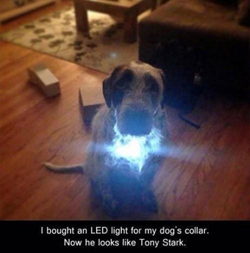 dogs tony stark iron man funny - 8001183744