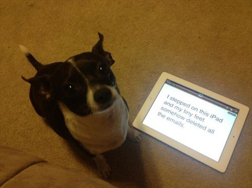 dogs,ipad,whoops,accident,shame