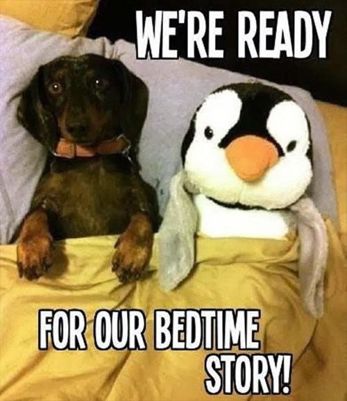dogs puppies bedtime penguins cute - 8001208576