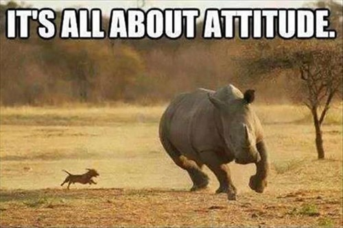 dogs,size-doesnt-matter,chase,cute,small,rhinos,attitude