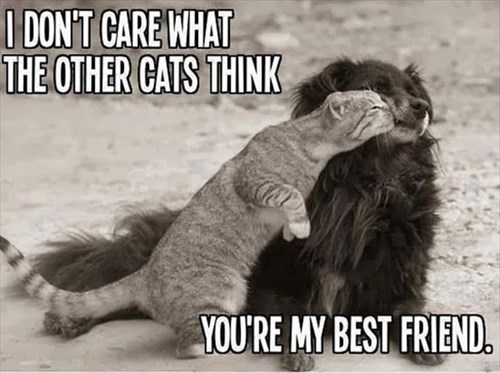 dogs friends cute adversity love Cats - 8001218304