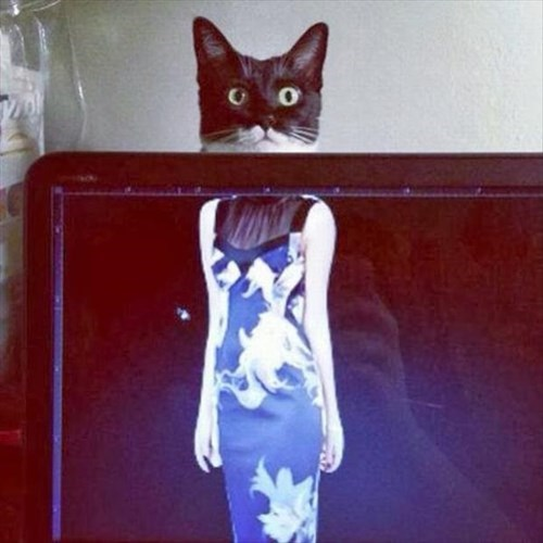 fashion cute dress Cats weird