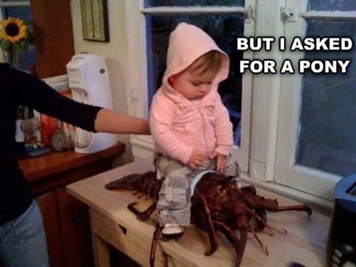 Babies ponies birthday lobsters funny