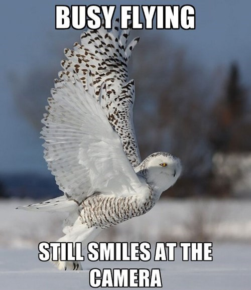 cool owls camera winter smile flying - 8001242112