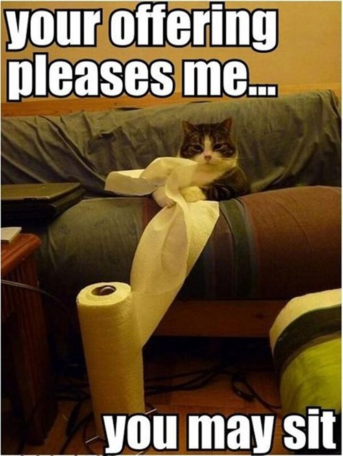 gifts,ruler,toilet paper,paper towels,Cats,funny
