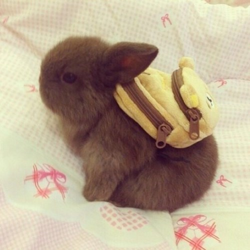 bunnies cute carrots backpack rabbits - 8001264128