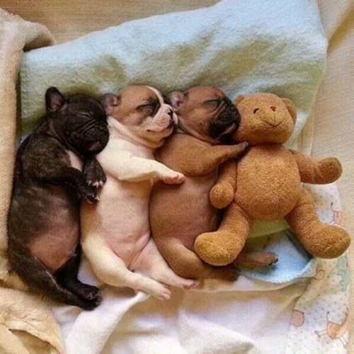 nap,snuggle,puppies,teddy bears,cute,sleeping
