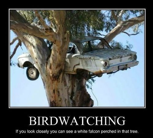 wtf car birdwatching tree funny - 8002291456