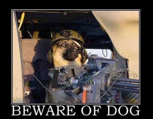 guns dogs wtf army funny - 8002324480