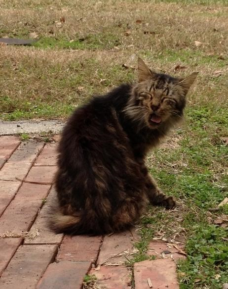 about to sneeze - Cat