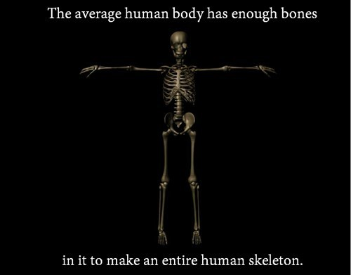 bones the human body skeletons - 8002441728