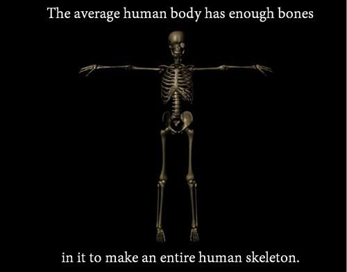 bones the human body skeletons - 8002441728