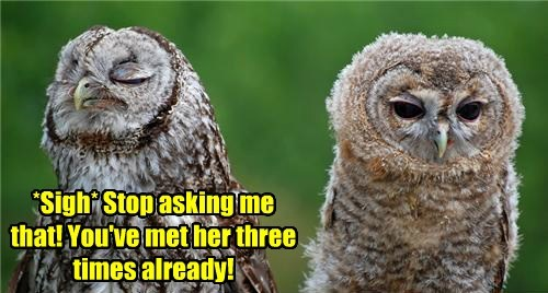 funny,puns,owls,who