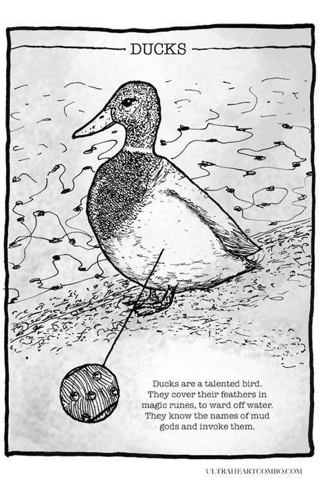 ducks true facts web comics magic - 8002470144