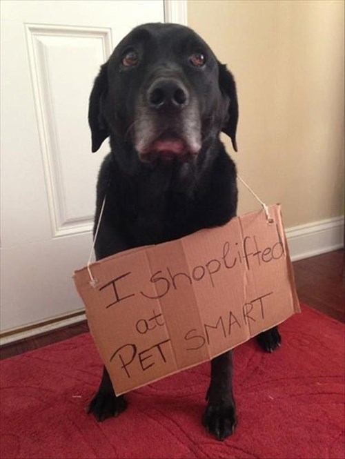 dogs shame pet smart shoplift