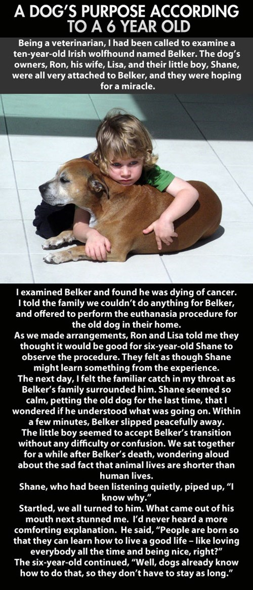 dogs,heart warming,wisdom,story,children