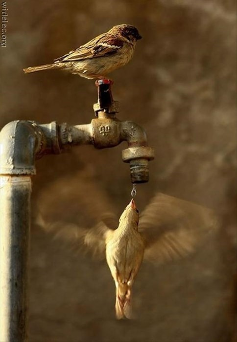 drink,birds,water,cute,teamwork