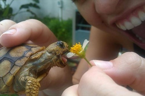 tiny tortoise cute flowers food eating - 8002640896