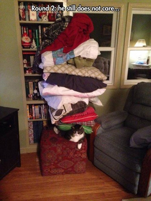 pile blankets pillows patience Cats funny comfortable - 8002642688