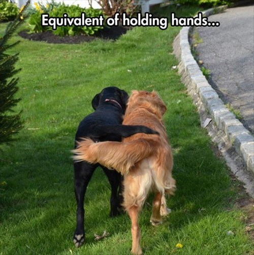 friends,cute,love,tails,holding hands