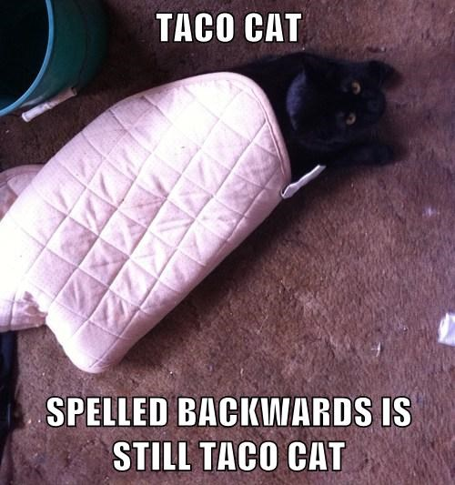 TACO CAT  SPELLED BACKWARDS IS STILL TACO CAT